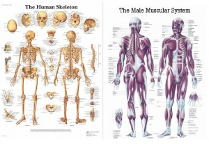 Anatomijos plakatų IŠPARDAVIMAS