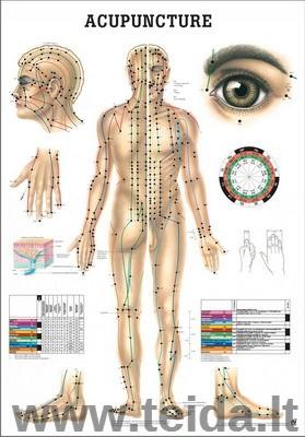 """Plakatas """"Viso kūno akupunktūros taškai"""""""