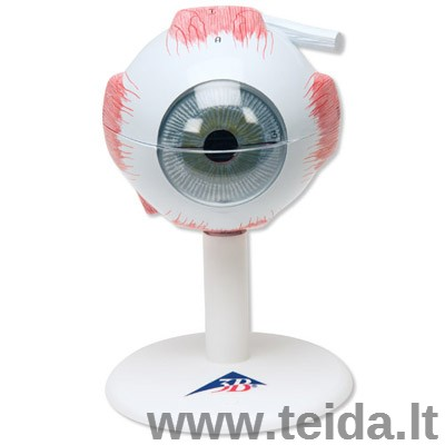 Žmogaus akies modelis