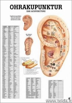 """Plakatas """"Ausies akupunktūros taškai"""""""