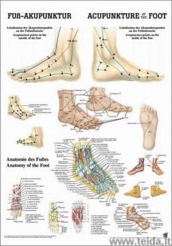 """Plakatas """"Pėdos akupunktūros taškai"""", 50x70cm"""
